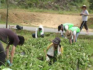 140730_volunteer_02.jpg