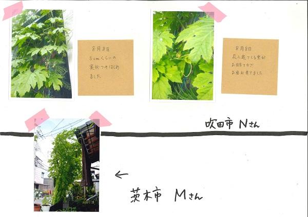 20201103 go-ya greencurtain2-2.jpg